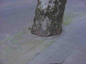Árbore estrangulado por falla de espazo