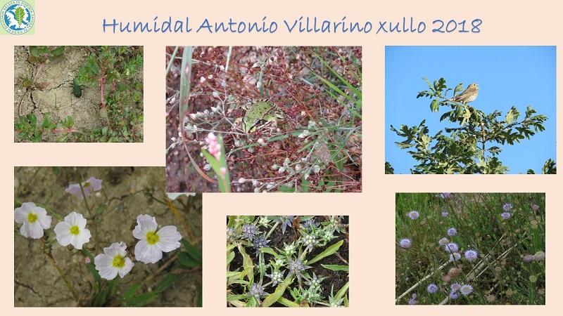 Flora e fauna no Humidal Antonio Villarino