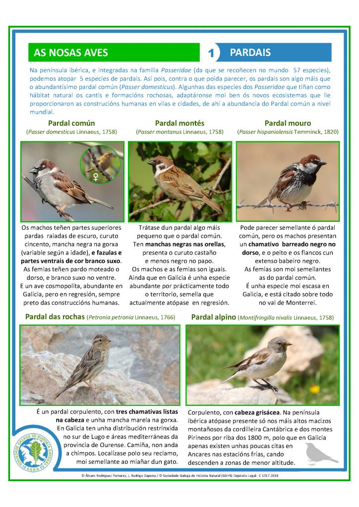 Ficha identificativa de pardais