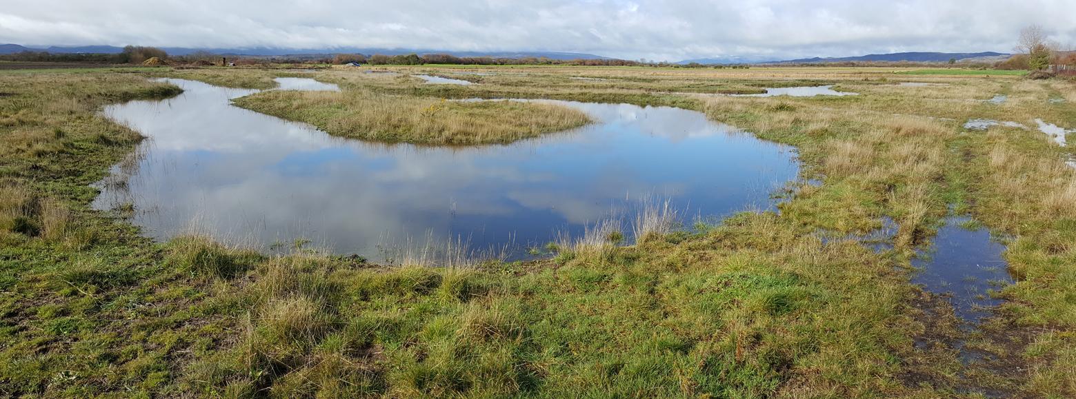Recuperación da lagoa de Antela