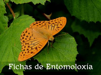 Fichas entomoloxia