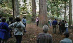 Arboreto de Lourizán: Sequoia sempervirens
