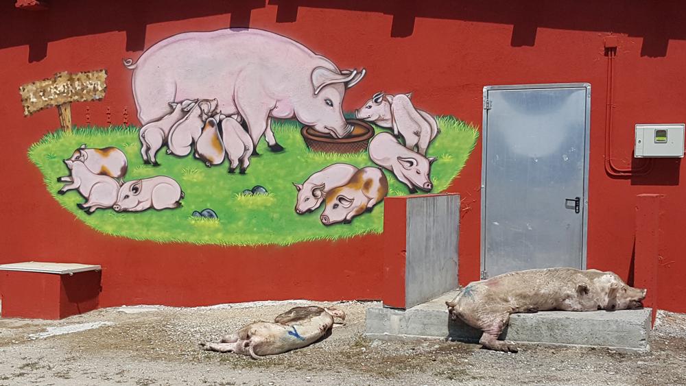 Imaxe e realidade das granxas industriais
