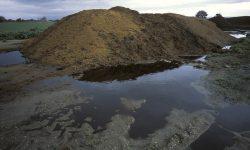 Lixiviados da mega-esterqueira de polos en Sandiás.