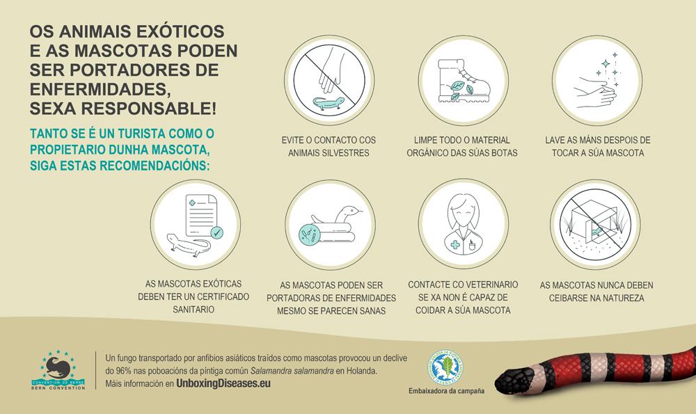 Pensa máis aló da caixa: evita a dispersión de enfermidades se eres turista ou propietario de mascotas
