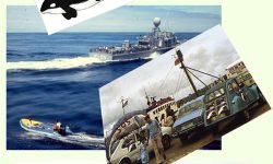 1980: En defensa dos mamíferos mariños